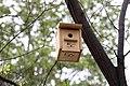 El Ayuntamiento instala 126 cajas nido en los árboles del Paseo de la Castellana 01.jpg