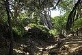 El bosque de pinos - Cala de los piratas - panoramio.jpg