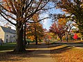 Elm Drive, Princeton University, Princeton NJ.jpg