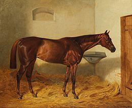 """Kincsem, """"a legyőzhetetlen csodakanca""""(Emil Adam festménye, 1878)"""