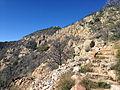 Emory Peak Trail.JPG