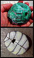EpiCai Turtle shell 4-holes ocarina.jpg