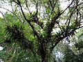 Epiphytes - Flickr - treegrow (2).jpg