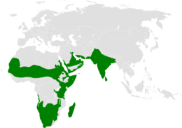 Eremopterix distribution map.png