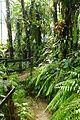 Espèces tropicales-Jardin des plantes de Nantes (10).jpg
