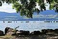 Estavayer-le-Lac - panoramio (177).jpg