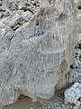 Ethiopie-Danakil-Fossiles (2).jpg