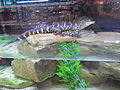 FL Citrus Center I-95 CR 210 Gator Tank.JPG
