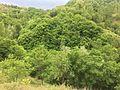 FOREST DENSE.jpg