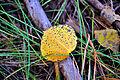 Fall colors 2010 - Aspen leaf (5057683630).jpg