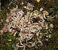 Fallen mushrooms.jpg