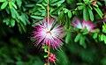 Fancy pink flower (Unsplash).jpg