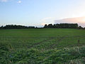 Farmland off Trent Lane - geograph.org.uk - 264361.jpg