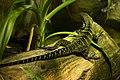 Fauna de Australia04.JPG