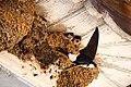 Feeding Time in a Nest, Romania (49315249213).jpg