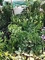 Fern Plants.jpg