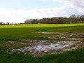 Field near Hackhurst Stud - geograph.org.uk - 352634.jpg
