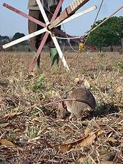 Finding Landmine