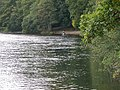 Fishing The River Earn - geograph.org.uk - 60931.jpg