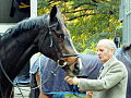 Flickr - Duncan~ - Black horse.jpg