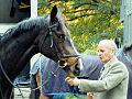 Flickr - Duncan~ - Black horse.jpg