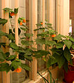 Flickr - Per Ola Wiberg ~ mostly away - flowers at work.jpg
