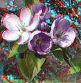Flickr - jimf0390 - JimF 04-21-10-0012a crab apple blossoms at WITCC.jpg