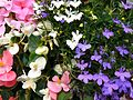 Flickr - ronsaunders47 - SUMMER BLOOMS.1.jpg