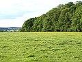 Flitwick Wood - geograph.org.uk - 1326385.jpg