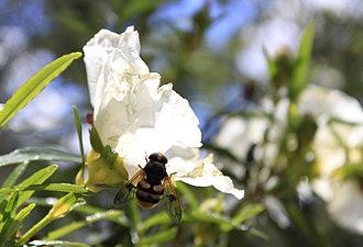 Flor 1 Cuenca Manzanares.jpg