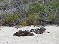 Floreana - Cormorant Point - Galapagos Islands - Ecuador (4871355328).jpg