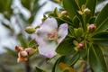 Flores da região de vila de igatu 3.png