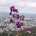 Flores na Serra do Curral.JPG