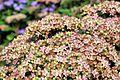 Flower 77 (8039783006).jpg