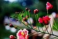 Flower Buds (18681365).jpeg
