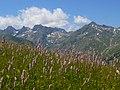 Flowers and upper Casterino Valley - panoramio.jpg