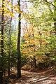 Flume Gorge Trail, Lincoln (494031) (11849522535).jpg