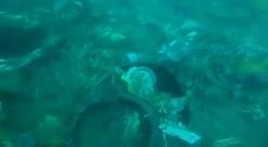 Datei: Filmmaterial von KOPASKA, das die Suche nach den Überresten des Sriwijaya Air Flight 182 (2) .webm zeigt