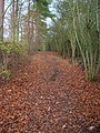 Footpath, Friston Forest - geograph.org.uk - 621287.jpg