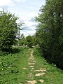 Footpath next to Darwell Stream - geograph.org.uk - 1285379.jpg