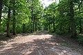 Forêt domaniale de Bois-d'Arcy 19.jpg