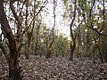 Forest - Jim Corbett.jpg