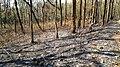 Forest Fire @ Wayanad Wildlife Sanctuary, Muthanga Range - panoramio.jpg