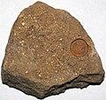 Fossiliferous sandstone (Allensville Member, Logan Formation, Lower Mississippian; Sugar Loaf Hill, Granville, Ohio, USA) 2 (46849500961).jpg