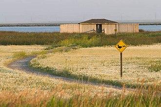 Frank Lake (Alberta) - Observation blind, Frank Lake wetlands.