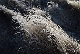 Frosty grass wave.jpg