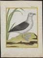 Fulmarus glacialis - 1700-1880 - Print - Iconographia Zoologica - Special Collections University of Amsterdam - UBA01 IZ17900074.tif