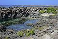 Galápagos Inseln, Ecuador (13894475171).jpg