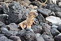 Galápagos sea lion, Santa Fe Island 01.jpg
