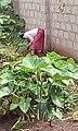 GardenWeeding.jpg